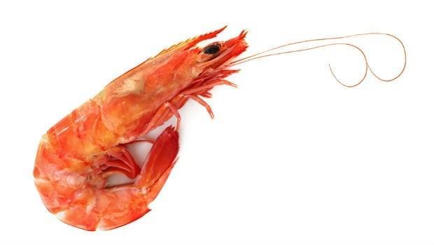 愛吸「蝦頭」,又怕吸到重金屬、排泄物?醫師破解「蝦頭」秘密