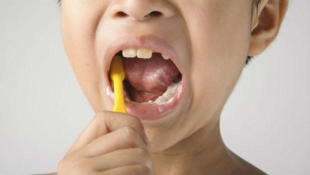 晚餐後刷了牙,到睡前也沒吃東西,可以不刷牙嗎?