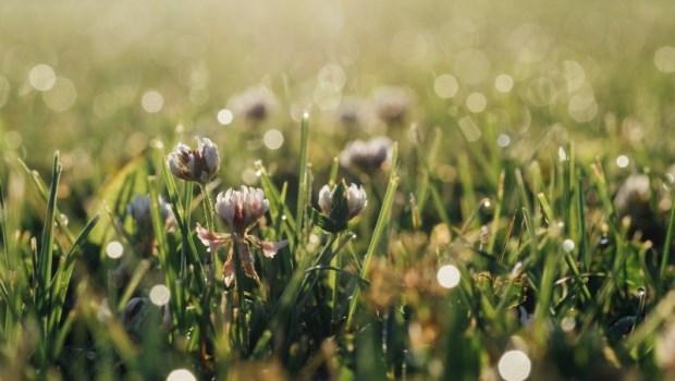 想要生命圓滿,不是每天做開心的事,而是知足的做每一件事