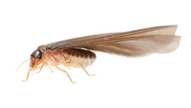 每到下雨就飛出來一堆白蟻(大水螞蟻)...該如何避免牠入侵,吃光家裡木傢俱?