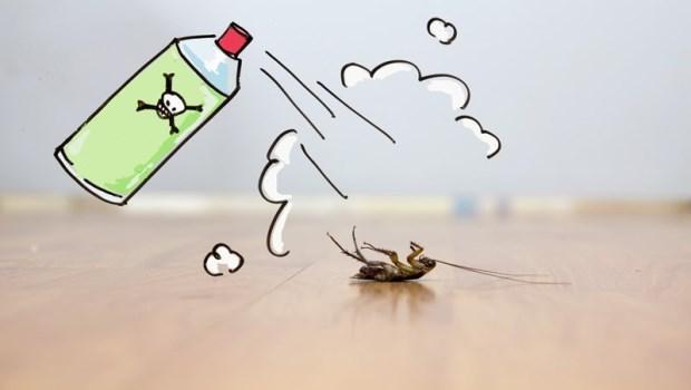 「蟑螂大便」滿是細菌病毒,別以為掃起來就沒事了!用家裡一定有的●●水滅菌消毒