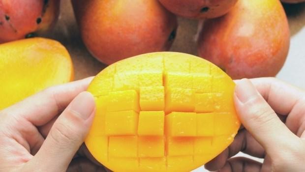 挑芒果要看顏色!17年資歷水果拍賣員:土芒果要看「頭」、愛文芒果要看「尾」
