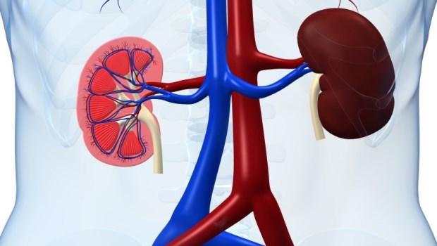 100個慢性腎臟病患者,96個沒感覺!不想終身洗腎,提早發現腎功能異常最好的方式是...