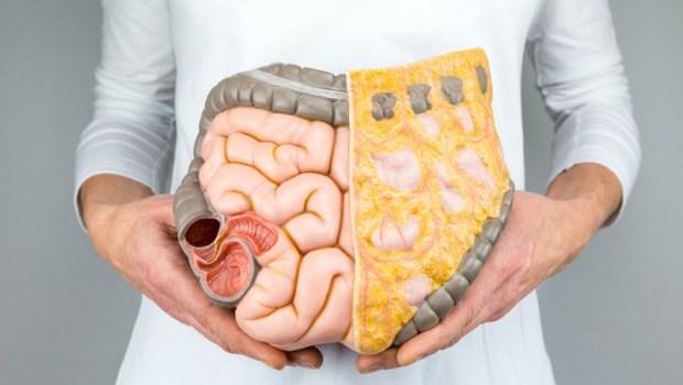 想睡好,關鍵在「養腸」!吃對4類食物,穩定腸道1億個神經細胞,就能從此不失眠
