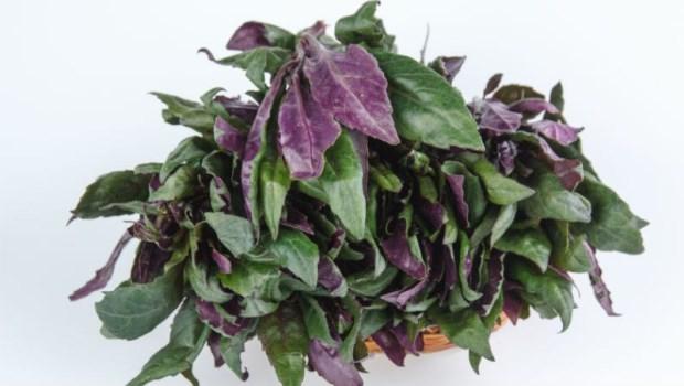 網路瘋傳「紅鳳菜有毒,吃多會肝硬化、致癌...」真的嗎?關於紅鳳菜必搞懂的2件事