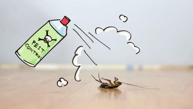 腐蝕小強骨骼、毒死整窩蟑螂...台大化工博士家中都用這個:成功殺死蟑螂