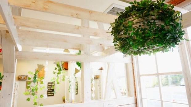 家住馬路旁?輔大教授:這5種植物吸收居家空汙微粒,是最佳空氣清淨機