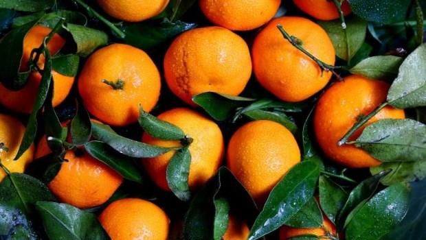 天天一顆橘子,能降低23%的失智率?失智症權威劉秀枝:最有說服力的防失智飲食法是...