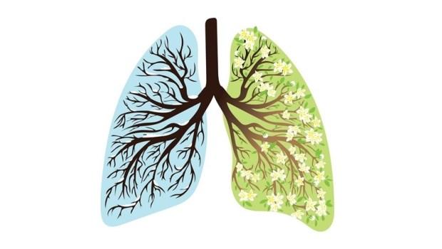 凡事發懶、有氣無力是「肺氣極虛」的表現!吳明珠推薦:10種食材調肺又止咳