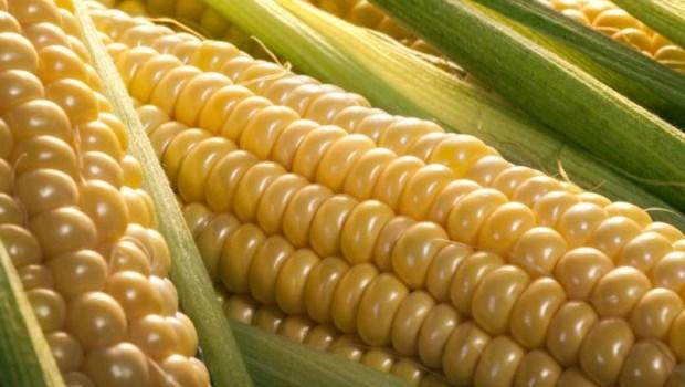 減肥就吃「蒸玉米」!營養師:解便秘,還預防高血壓、動脈硬化