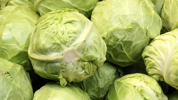 高麗菜這樣吃,有效降血脂!書田家醫科主任建議:油炒更營養