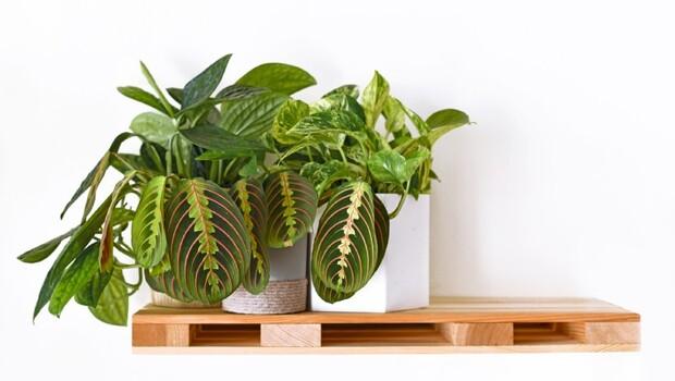 想要淨化空氣、防空汙,植物怎麼挑、怎麼種最好?專家教你:1分鐘檢視最適合你家的植物
