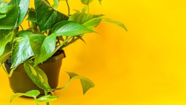 從浴室到廚房...33種「空氣淨化植物」全解析!專家告訴你:這2種最萬用,除異味又消滅有害物質