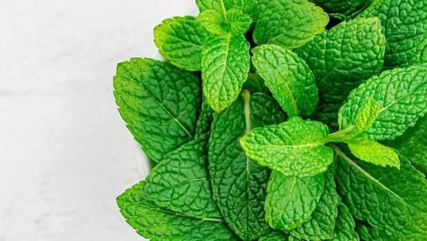 蟑螂原來有討厭的味道?薄荷、檸檬草...日本家事專家靠「這9種氣味」,讓家中6年看不見蟑螂