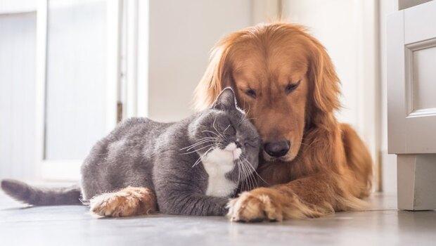 你是狗派or貓派?喜歡炫耀寵物的人,其實很虛榮?掛「家有惡犬」,可能人際關係疏離?心理師教你從「寵物」看性格