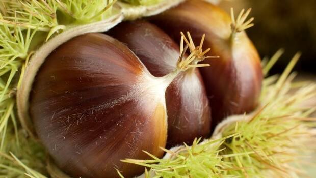 秋天補氣,吃栗子正適合!3種當季食材,活血健脾、補腎強骨