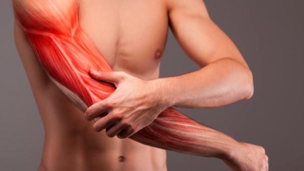 肌肉原來有分「紅肌、白肌」!練錯讓你易老又生病...40歲後你該懂的「肌肉鍛鍊法」