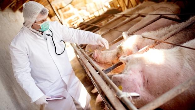 我不想吃到「瘦肉精」該怎麼辦?教你5招辨別美豬,避免吃入萊克多巴胺