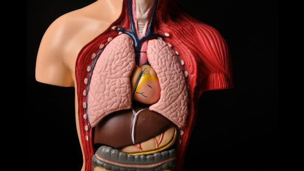 從此不生病!跟日本名醫學「讓內臟變年輕」10法則