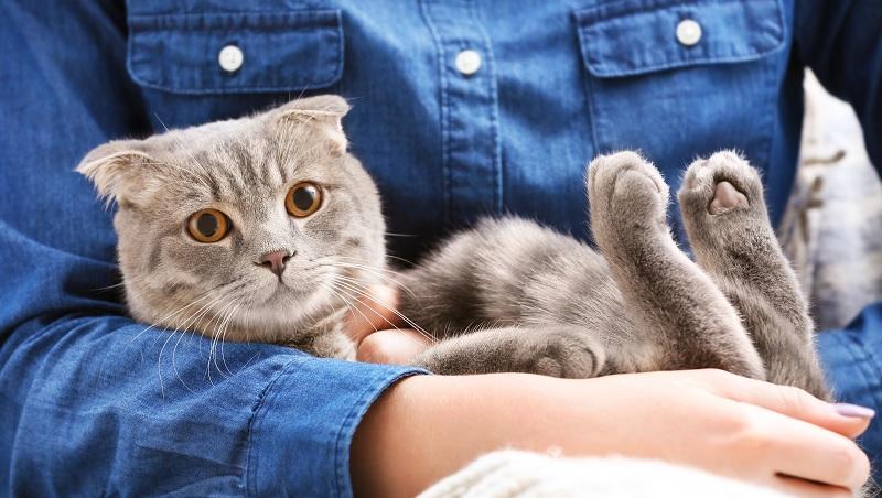 貓咪不給你摸,不代表不喜歡你!眨眼、側躺...養貓人都該知道的「貓咪行為學」