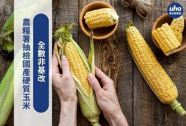 農糧署抽檢國產硬質玉米 全數非基改